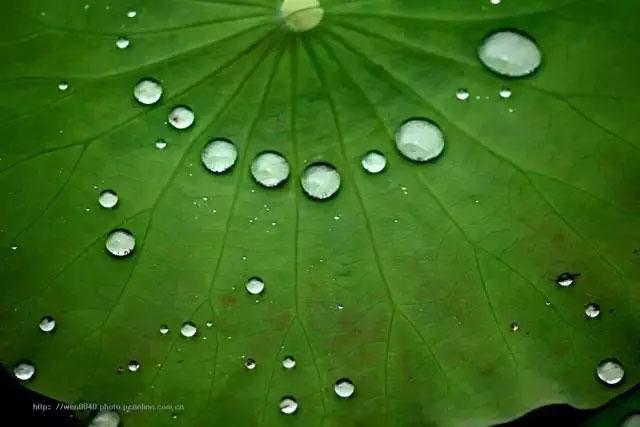 荷叶的基本化学成分是叶绿素